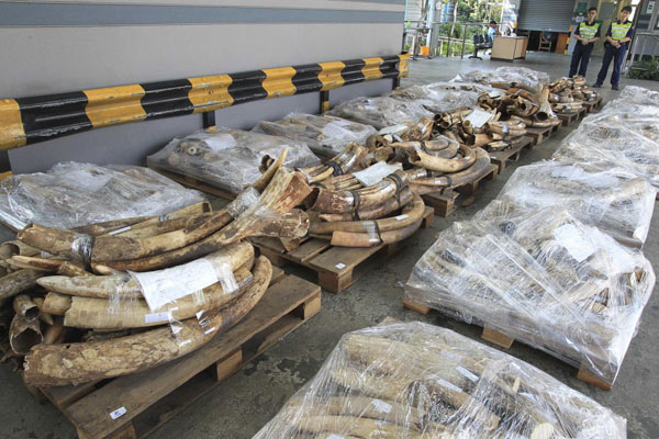 HK makes largest ivory seizure worth $3.5m