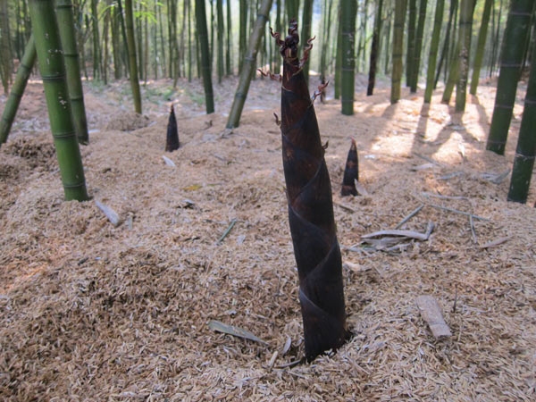 rural bamboo business thriving