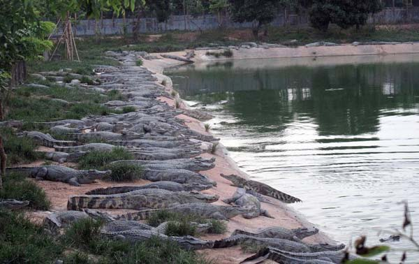 Crocodiles escape from farm in S China