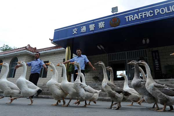 Birds of a feather flock together to boost police ranks in Xinjiang