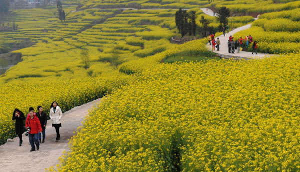 Early Bloomers: Best times to view spring flowers in Beijing