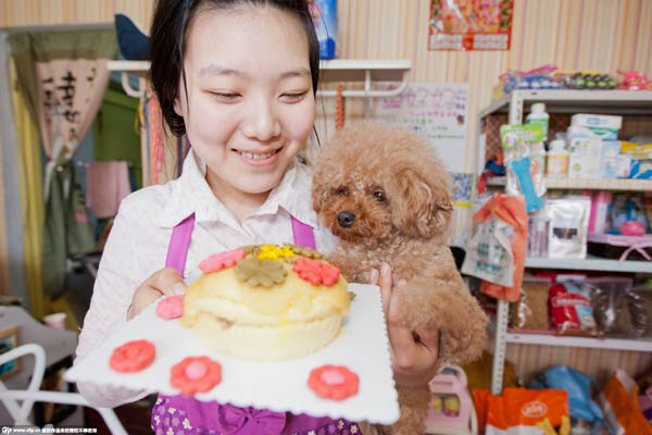 Get a birthday cake for your pets