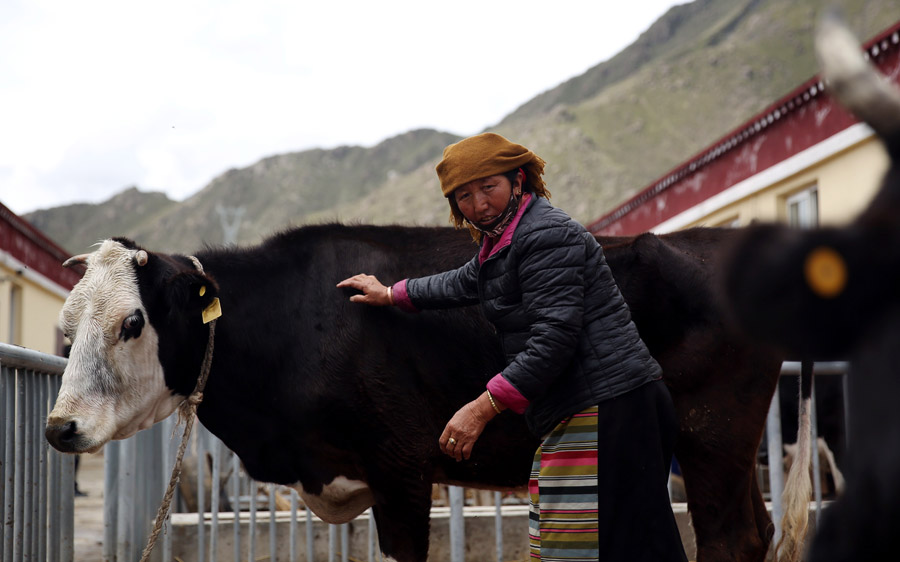 Tibet builds escape route from poverty
