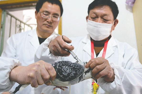China OKs US-made bird flu drug