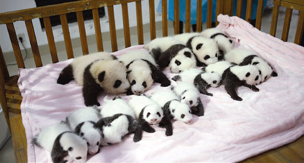 It's been a panda-ful year