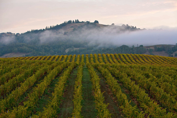 China's Napa Valley bid ripe for growth