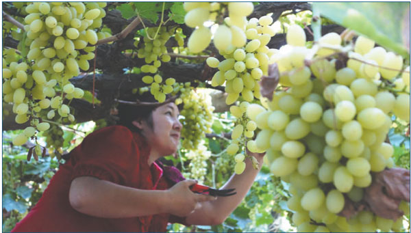 Wine in the US: 'Made in China' is rare
