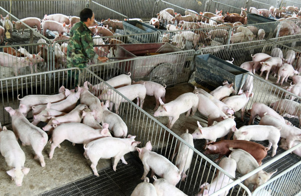 Piggery business plan philippines pdf