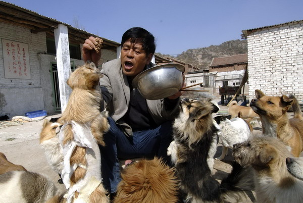 Sick man helps stray dogs in E China
