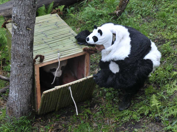 panda suits