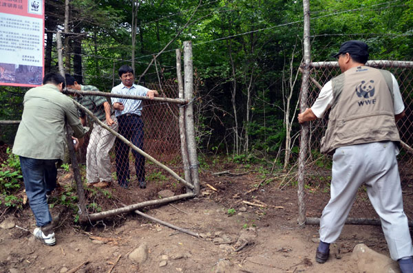 Over 30 deer released to appease tigers