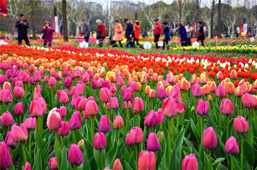 Spring flowers bloom across china1 popular destinations spring flowers bloom across china mightylinksfo Images