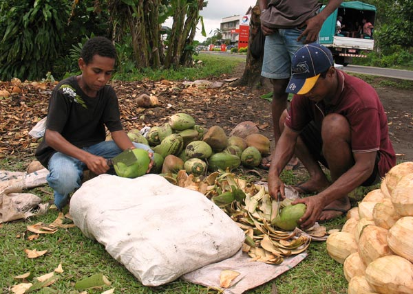 Fiji coconut